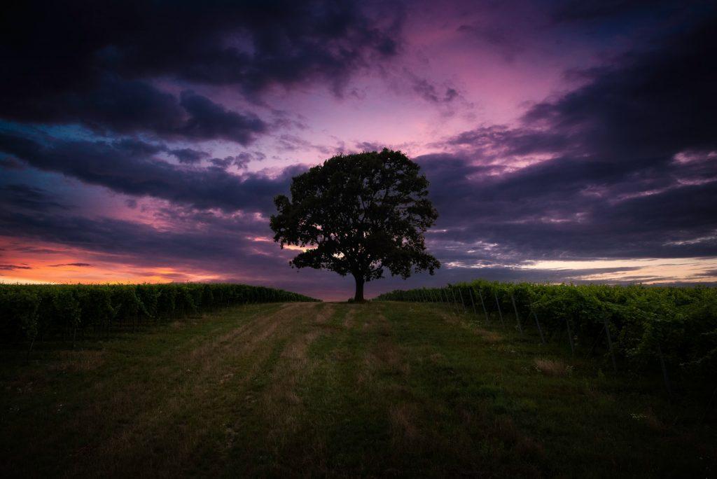 Eich mit violettem Hintergrund