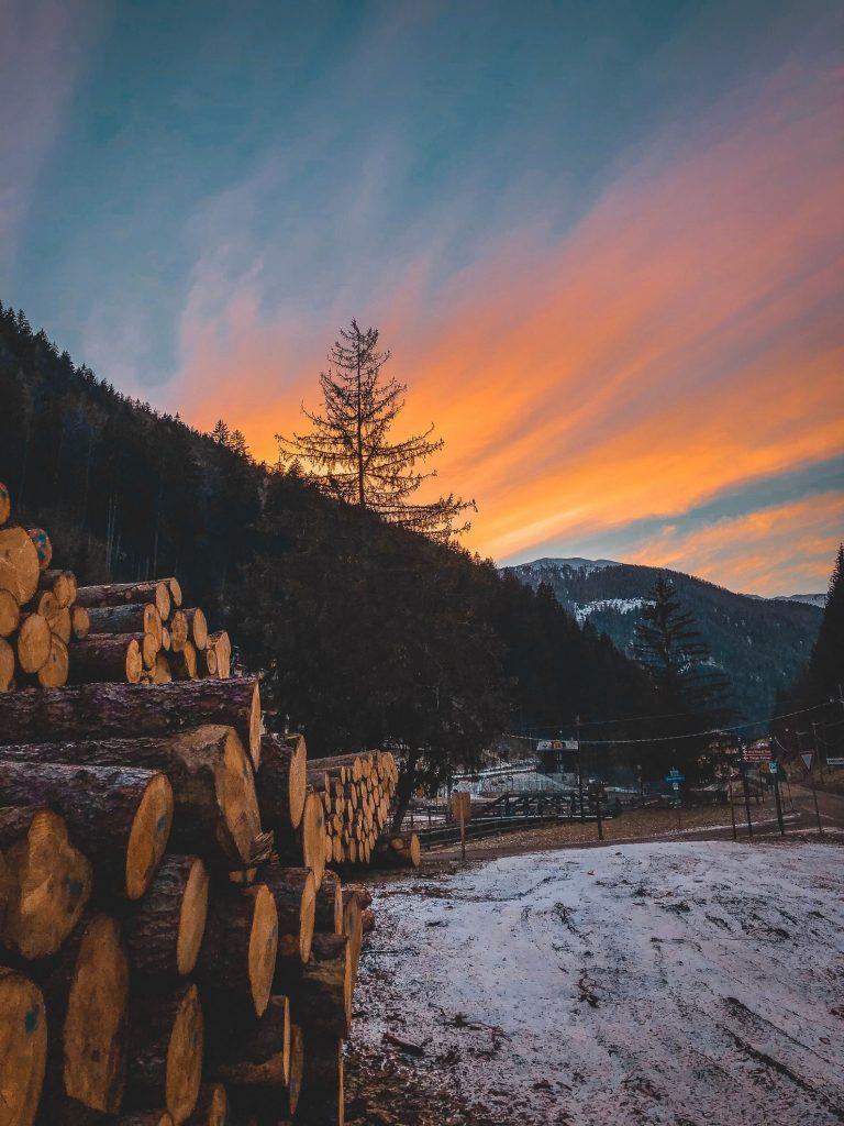Ein Holzhaufen vor einem Baum mit einem orangen Himmel eingebettet im Beitrag Holz