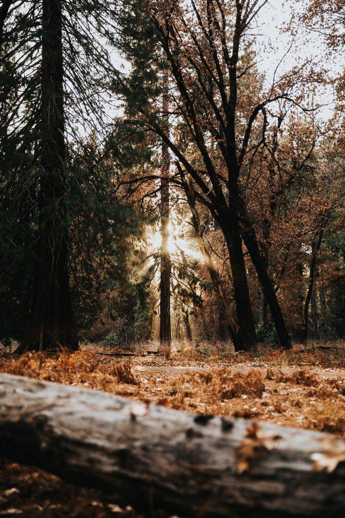 Ein Foto im Wald mit durchblickender Sonne im Beitrag für Hackschnitzel event
