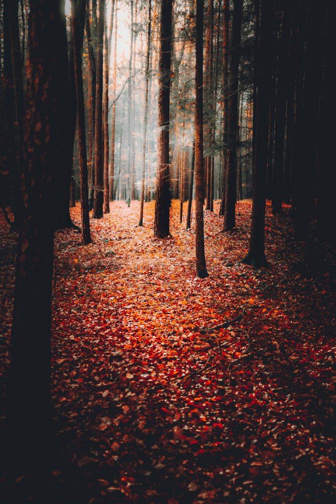 Wald im Herbst - Hackguterzeugung
